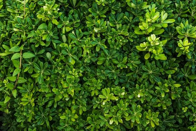 top-view-beautiful-arrangement-green-foliage_23-2148327859.jpg